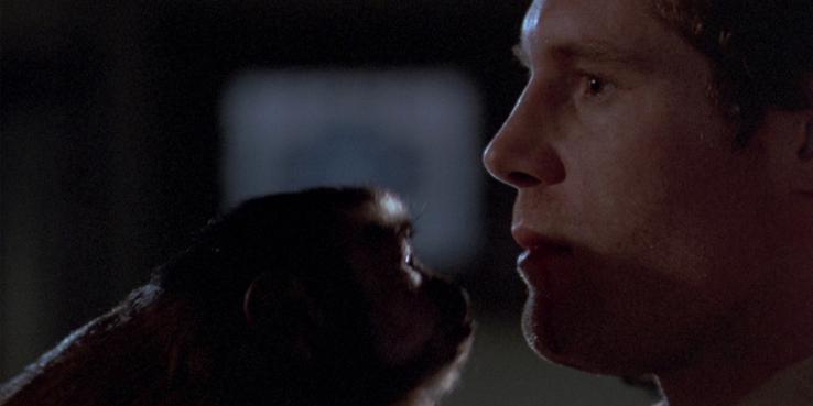 monkey-shines.png